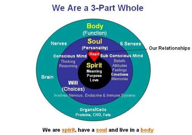 spirit-soul-body-mind-emotions-will.jpg